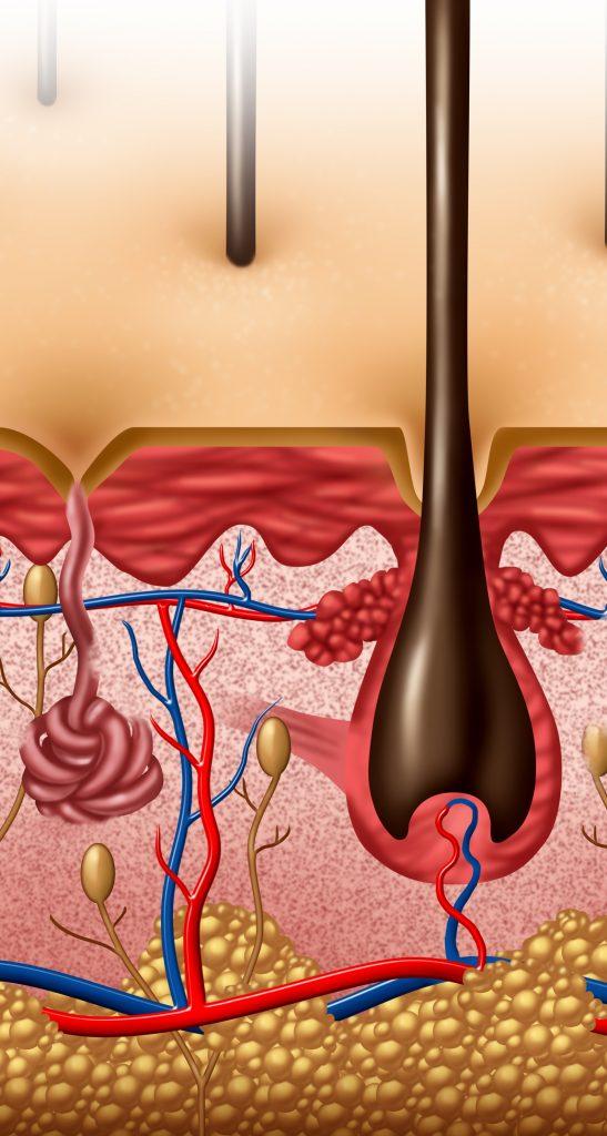 Alopecie chelie chelire caderea parului tratament celule stem rigenera doctor mit