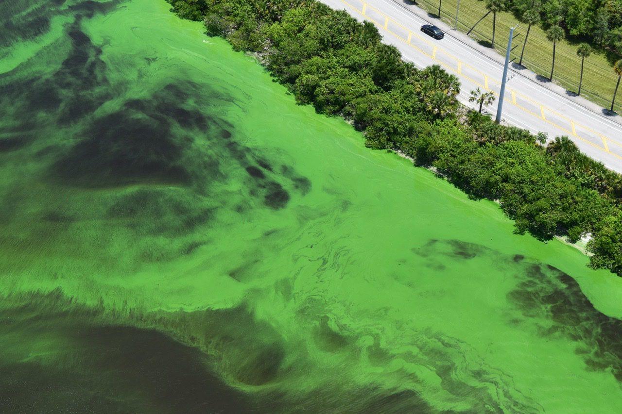 Dovada scaderii concentratiei de oxigen in mareele algare