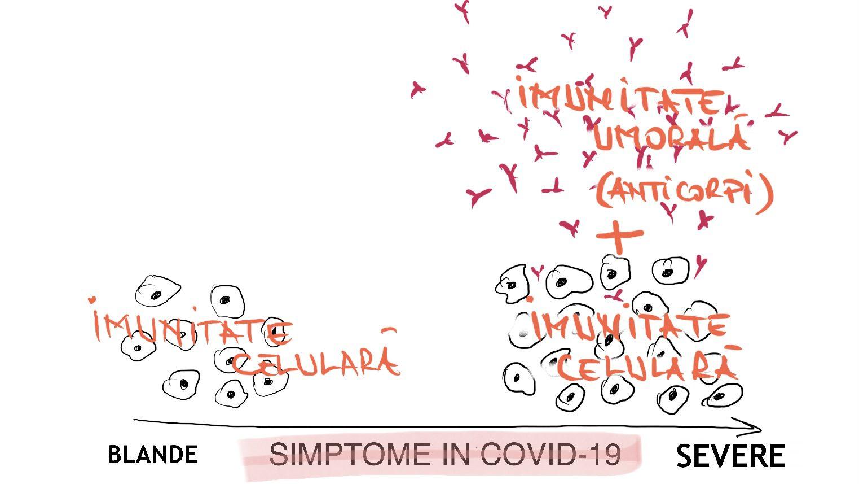 Relatie celule anticorpi