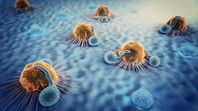 Leucocite atacand celule tumorale
