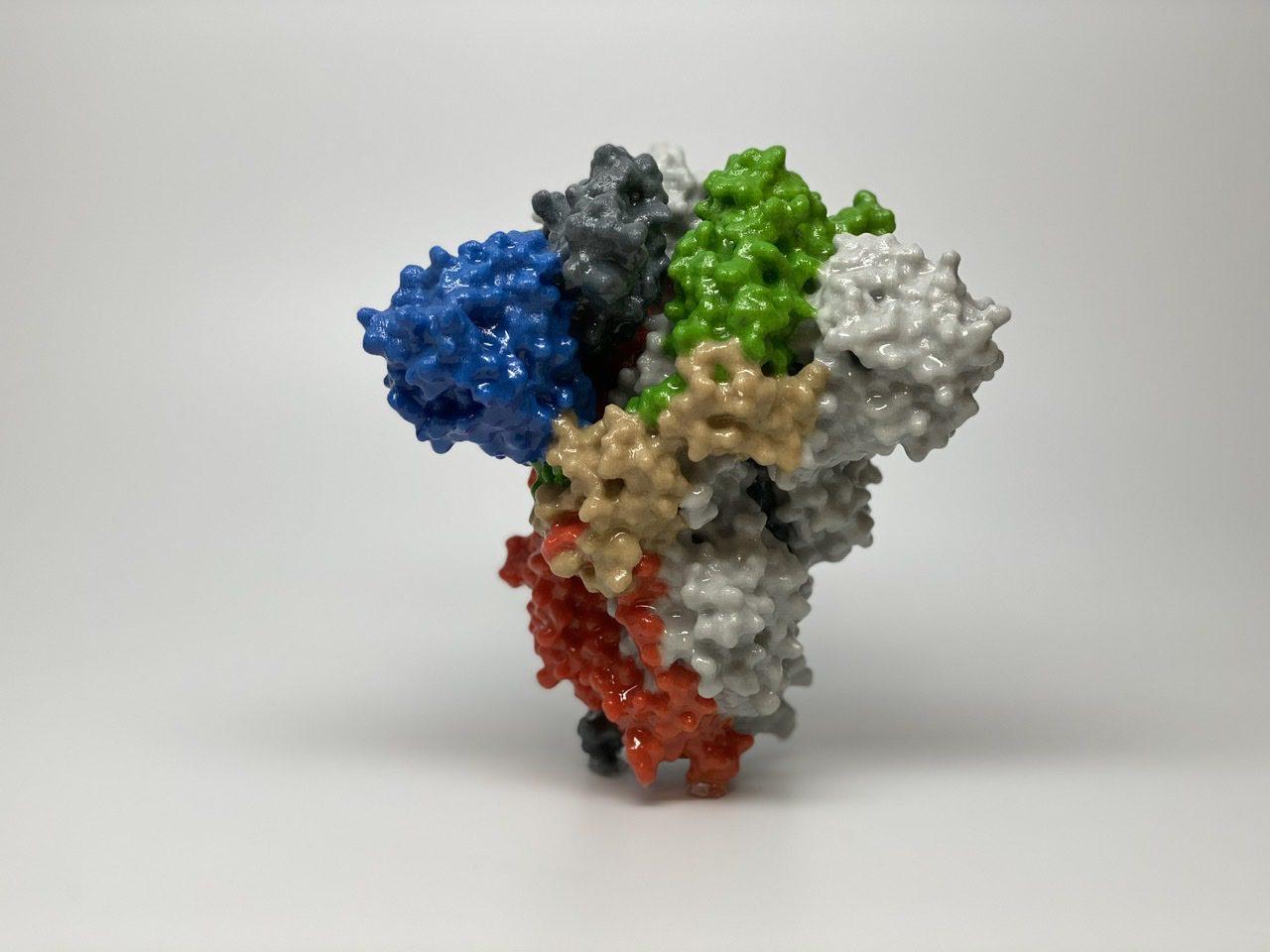 Proteina tepusa a coronavirusului